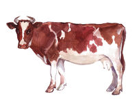 Watercolor single cow animal Royalty Free Stock Photo