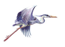 Free Watercolor Single Heron Animal Isolated Stock Images - 96835054
