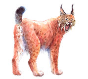 Watercolor single lynx animal isolated Royalty Free Stock Photo