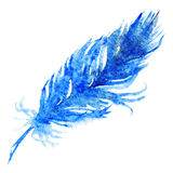Watercolor single navy blue bird feather.  Stock Image