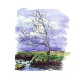 Watercolor sketch - birch beside the river on a cloudy day at sunset royalty free illustration