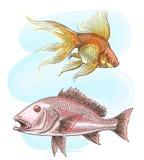 Watercolor sketch fish set vector illustration