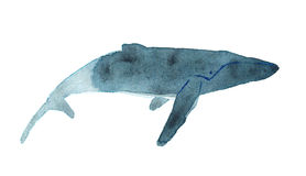 Watercolor sketch of humpback whale. Illustration  on white background Stock Photo