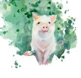 Watercolor sketch of piglet. Stock Photo