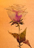 Watercolor sketch: a pink rose bud on white. Stock Photo