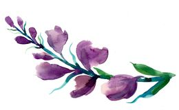 Purple flower vector illustration