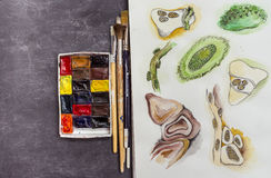 Watercolor sketches and brushes. Watercolor painting sketches, watercolor cubes and paint brushes Stock Photos