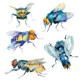 Watercolor sketches of insects. stock illustration