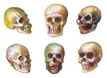 Watercolor sketches of skulls. Drawing paint on paper. Seamless woven pattern. stock illustration