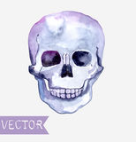 Watercolor skull background Royalty Free Stock Photo