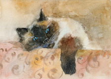 Watercolor sleeping color-point cat Royalty Free Stock Image