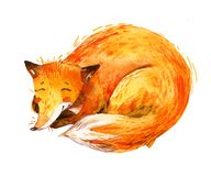 Watercolor sleeping fox isolated on white background. Cute animal drawing in cartoon style. Hand painted illustration for children, kids design Royalty Free Stock Photos