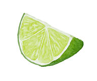 Slice Of Lime Drawing By Watercolor Stock Vector - Illustration of background, harvest ...