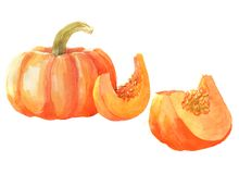 Watercolor sliced pumpkin vegetable isolated