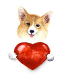 Watercolor small dog with heart. Pets illustration. Watercolor cute lover valentine havanese puppy dog is holding a red heart, isolated on white background Stock Photography