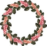 Watercolor wreath snowberry pink royalty free illustration