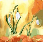 Watercolor snowdrop flowers. Spring vector picture with white flower stock illustration