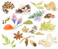 Watercolor spices set. Royalty Free Stock Images