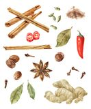 Watercolor spices  on wite background. Hand drawn watercolor spices - cinnamon, cardamom, nutmeg, bay leaf, chilli pepper, anise star, cloves  on wite background Stock Image