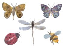 Watercolor splash insect bug moth, butterfly, ladybug, dragonfly, bee Isolated element