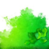 Watercolor spot with green leaves Stock Images