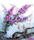 Watercolor spring background. Purple flowers on tree branches Stock Images