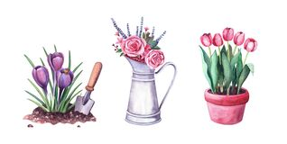 Free Watercolor Spring Crocus In The Soil And Shovel, Red Tulips In A Pot, Flowers In A Vintage Metal Pitcher Stock Photography - 192218632