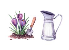Free Watercolor Spring Crocus In The Soil And Shovel, Vintage Metal Pitcher. Illustration For Farm House On White Background Stock Photo - 193066360