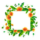 Watercolor Spring dandelion flowers, blossoms square frame isolated on white background. Stock Photography