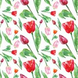 Watercolor spring floral pattern with tulips flowers, isolated on white background. Colorful seamless botanical pattern. For wrapping paper, cards, mothers day stock photo