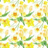 Watercolor spring floral pattern in yellows colors with daffodils and tulips flowers on white background. stock illustration
