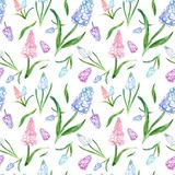 Watercolor spring floral seamless pattern with blue and pink muscari flowers on white background. stock photo