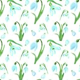 Watercolor spring floral seamless pattern with blue snowdrops flowers on white background. Bright botanical print for design. Watercolor spring floral seamless stock photography