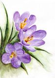 Watercolor - spring flowers Royalty Free Stock Photo