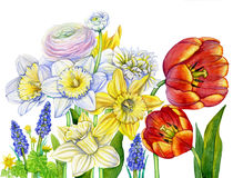 Watercolor spring flowers blooming stock illustration