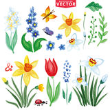Watercolor Spring flowers set Stock Image