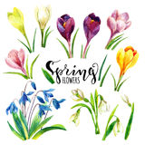Watercolor spring flowers set. Watercolor flowers. Royalty Free Stock Image