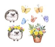 Watercolor cute hedgehog, flowers and butterflies painting. Spring garden theme. Colorful botanical illustration