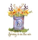 Watercolor spring illustration. Hand-drawn watercolor bucket with spring flowers isolated on the white background. Greeting card template, spring illustration Royalty Free Illustration