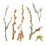 Watercolor spring set od tree branches, sticks, twigs with leaf buds. Open up pussy willow tree, isolated on white background. Decorative elements collection stock illustration
