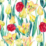 Watercolor spring tulips field seamless pattern. Blooming tulips season in Holland. Watercolor floral seamless pattern on white background. Hand painted Stock Photo