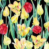 Watercolor spring tulips field seamless pattern. Blooming tulips season in Holland. Watercolor floral seamless pattern on black background. Hand painted Stock Photo