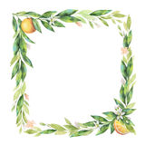 Watercolor square frame fruit orange branch isolated on white background. Stock Image