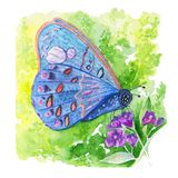 Watercolor square illustration about colorful butterfly on the grass and flower on the white background. vector illustration