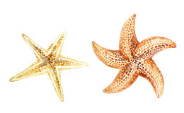 Watercolor starfishes royalty free stock photo