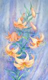 Watercolor still life. Pink lilies Royalty Free Stock Images