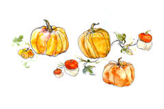 Watercolor still life of a pumpkin with leaves Stock Photos