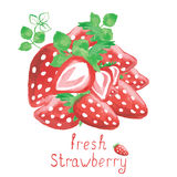 Watercolor strawberries isolated on white. Strawberries. Hand drawn watercolor painting on white background.  Vector illustration Royalty Free Stock Photography