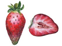 watercolor strawberries stock images