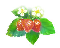 Watercolor of Strawberry Stock Image